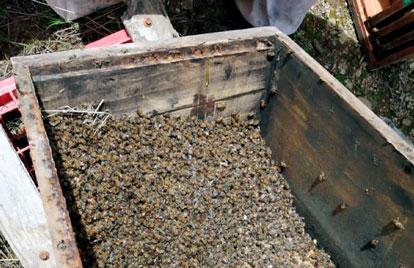 Intoxicación de abejas